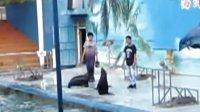 精彩的海狮表演