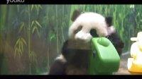 长隆大熊猫宝宝隆隆玩摇马