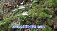 惊奇日本冒險旅行:未知的秘境在日本岐阜