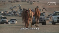 旅行指南:骆驼小姐选美大赛