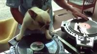 DJ Dog Show