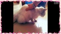 与流浪猫的邂逅