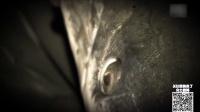 第24期 半鱼半鳄巨型水怪 传说中的食人魔