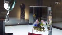 上海琉璃艺术博物馆 WHY GLASS 展精彩纵览