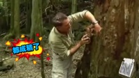第39期 螃蟹国王强盗蟹 15斤重1米长