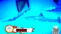 第41期 鬼鲨面目狰狞 深海幽灵猎手