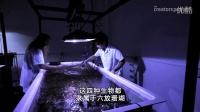 珊瑚城 进入发光的迷幻生物世界(一)