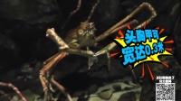 第69期 日本杀人蟹疑似核辐射变异