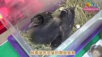 動物寶寶風災落難 救傷中心變嬰兒房