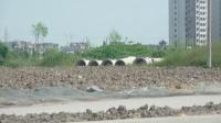南汇区惠南镇小学北校区周边的恶劣环境