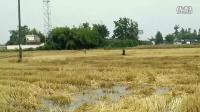 邛崃市绿环畜禽粪便收集服务专业合作社在邛崃市泉水镇浇灌作业(联系电话:13699475444)