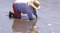 沙滩上掏皮皮虾,不一会儿就捉到好几只
