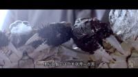 西风起 蟹脚痒 又到了吃螃蟹的季节 585—《二更视频 2