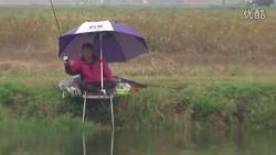 名人钓鱼视频大全_路亚钓鱼视频野钓实战