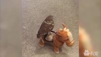 宠物大战人类的机器人,辣眼慎入!