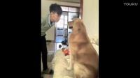 这样对待狗狗,看到最后,狗狗要发火了!