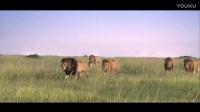 搞笑视频:开疆扩土五头雄狮组成联盟,攻陷另一个狮群