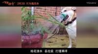"""《一条狗的使命》之""""狗狗的世界""""特辑"""