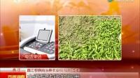 中新科技网 海南一村三万亩辣椒滞销!椒农直接放倒在路边 产业升级 品种改良紧迫