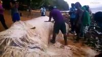 怪兽来了 菲律宾地震后海边出现白色巨毛怪尸