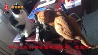萌宠物语 我叫土豆,一只猫讲述猫为什么会喜欢钻纸箱和柜子