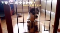 2016網絡最火的哈士奇搞搞笑視頻合集