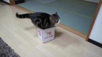 猫咪与盒子,再小的盒子都钻给你看!