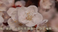 山西太谷——《一夜春风杏花开》谷牛摄