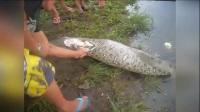 男子在河边抓到瘫痪的巨蟒,剖开蛇肚后诡异的画面让人头皮发麻