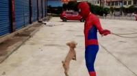 泰日天挑战蜘蛛侠,跳绳谁怕谁啊