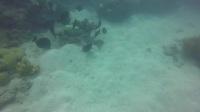澳大利亚大堡礁潜水之旅。