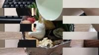 小野花式点钞发红包 16