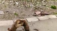 可爱的搏击,小动物也推手