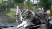 当猫咪遇到雨刮器 彻底被玩坏的节奏