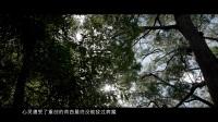"""帕罗尼拉公园: 探秘真实的""""天空之城"""""""