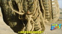 巨骆驼蜘蛛你敢惹吗? 连美军士兵都惧怕它三分!
