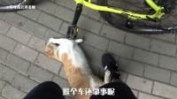 目中无喵! 撞完猫就想走?