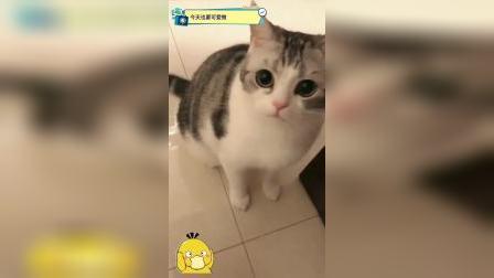 给猫拍个写真,它还不乐意,还动手打我。