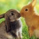 我爱兔崽崽