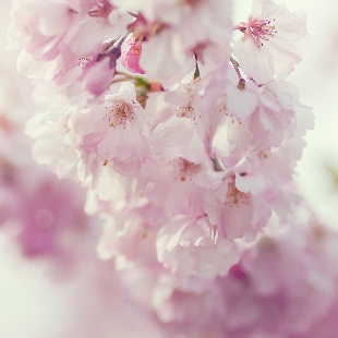 花开月圆O
