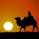 旅人的骆驼