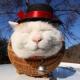 胖猫oOOo