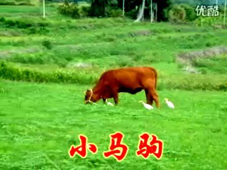 梦中有片绿草地