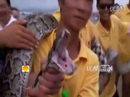 [拍客]游客海岸游泳突遇四米长大蟒蛇 救生员紧急打捞