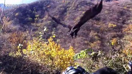 【实拍】座山雕重返蓝天——IFAW BRRC秃鹫放飞