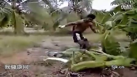 凶狠的泰拳扫腿踢树合辑