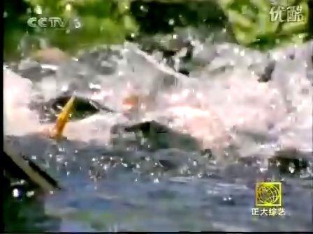 世界上最凶猛的淡水鱼_水虎鱼(食人鱼)