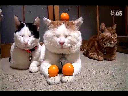 小合集 猫叔一家和各种橘子