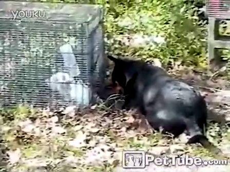 【优酷搞笑】狗狗帮兔子劫狱