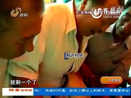 2012-07-17胶州:土豆选美 短信中大奖